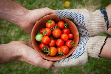 Ludzie podają sobie miseczkę z pomidorami