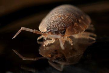 Ładny powiększony robak